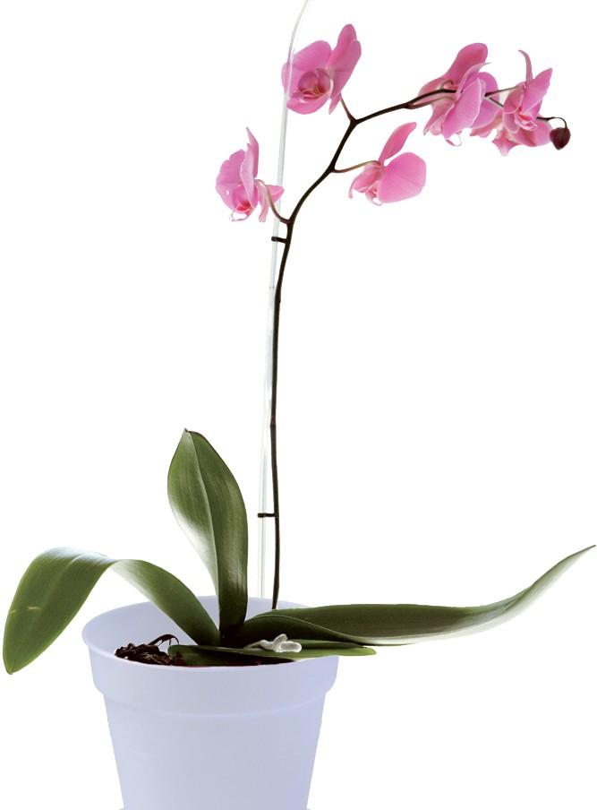 Orchideentopf Speziell für Orchideen Gute Belüftung und Bewässerung Kunstst