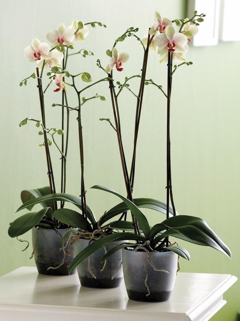 Elho Orchideentopf BR�SSEL rund 12,5cm, gefrostet